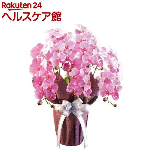 エレガント胡蝶蘭 紫(1個)