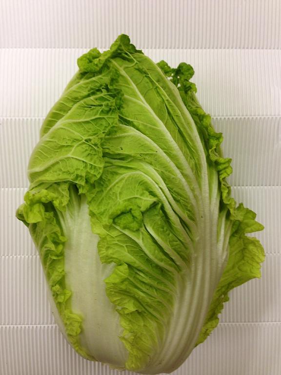 【岡山県産】  白菜 6玉