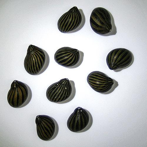 スタッフが厳選した個体をお届けいたします。gf749-3 【金魚宝典】シマカノコ貝(Neritina turrita)(2cm±)3匹セット☆東南アジア産☆★スタッフセレクト個体★