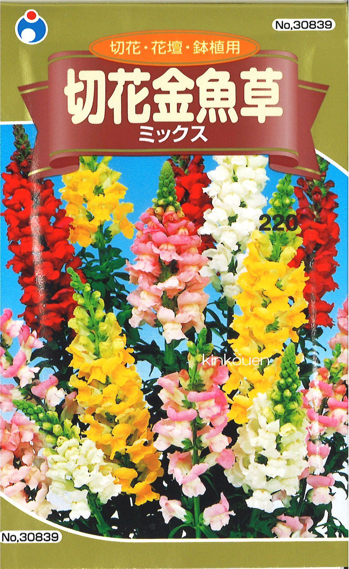 □切花金魚草混合物