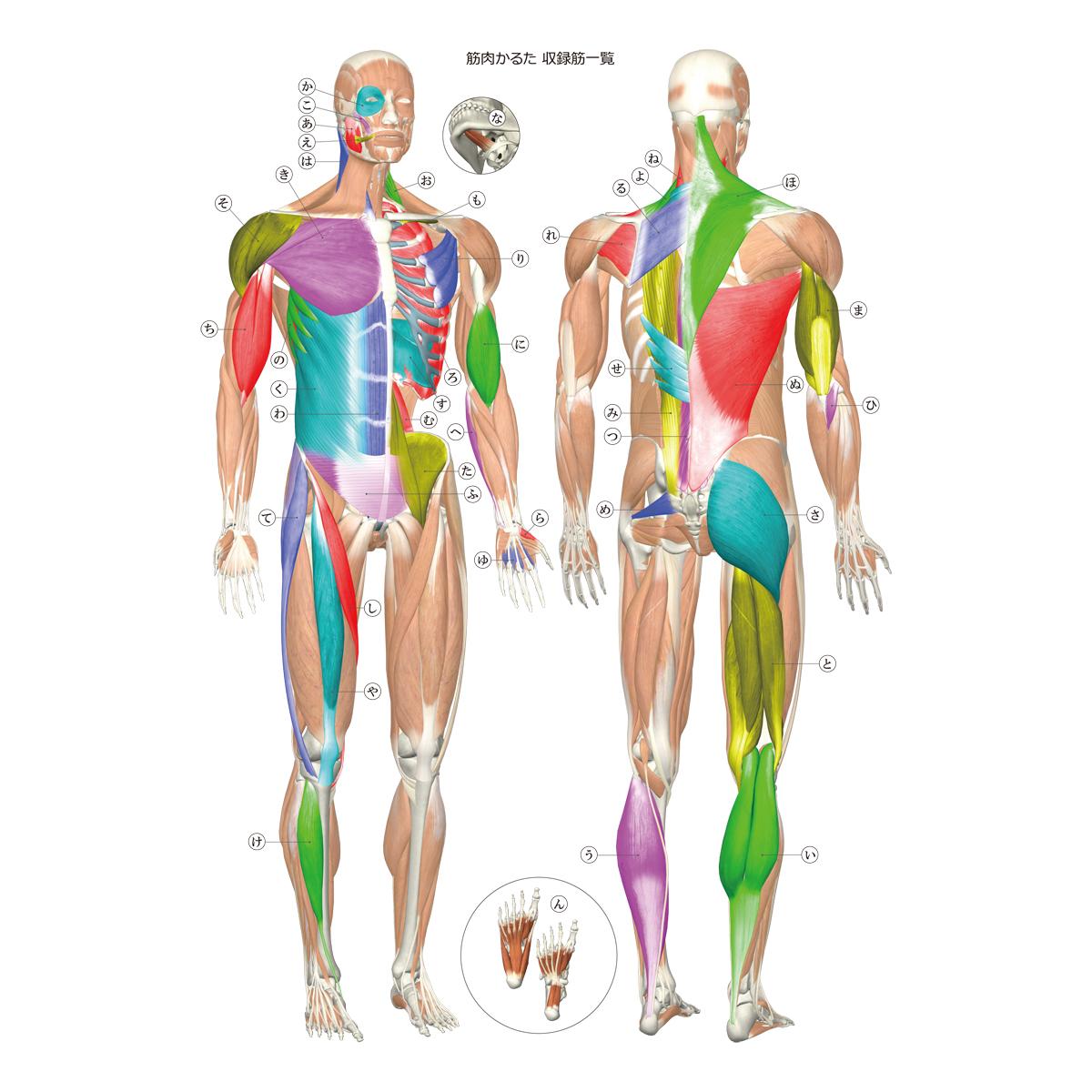 名前 背中 筋肉 ストレッチの種類と名前!特徴や効果を徹底解説!