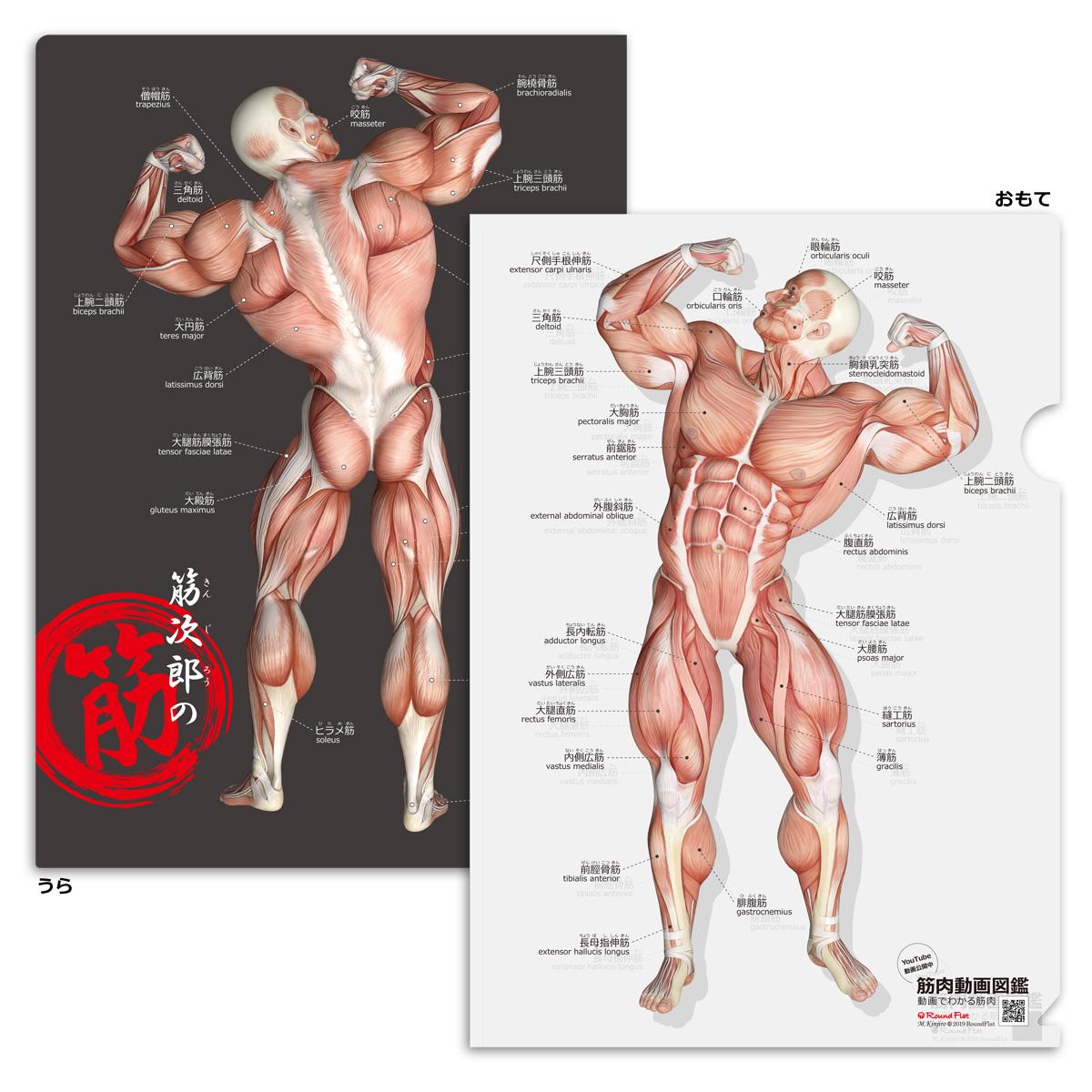楽天市場】クリアファイル 筋肉 「筋次郎の筋 クリアファイル」 A4 ...