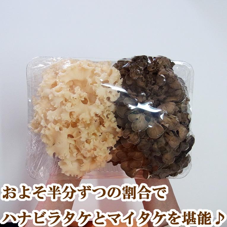 生鮮ハナビラタケ・マイタケ詰め合わせ(500g)コリコリ食感が魅力のハナビラタケと香り高きマイタケの詰め合わせセット♪栽培直売の鮮度でキノコを堪能♪