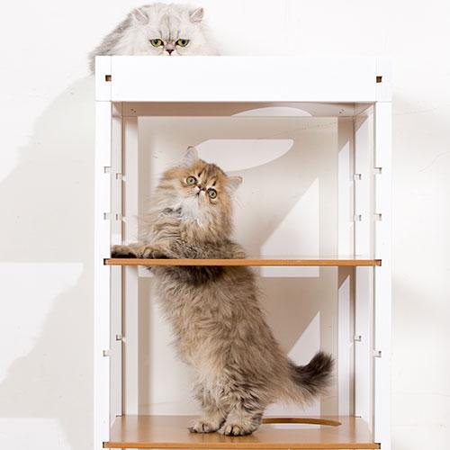 キャットタワー 「キャット タワー パレス 2棟セットT」 おしゃれ 木製 据え置き 猫タワー ネコタワー 多頭飼い 室内用