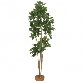 『人工植栽』 タカショー グリーンデコ和風 カクレミノ 鉢無 1.8m GD-67 #21512600