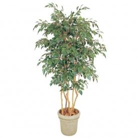 『人工植栽』 タカショー グリーンデコ鉢付 ベンジャミン 立木 5本立 1.8m GD-142