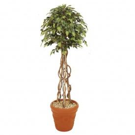 『人工植栽』 タカショー グリーンデコ鉢付 ベンジャミントピアリー 1.8m GD-161