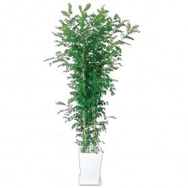 送料無料【オンリーワン】現代のインテリアに合う観葉植物ばかりです。 オンリーワン インドアグリーン ゲッキツ 10号 陶器鉢付き  MN6-TG10