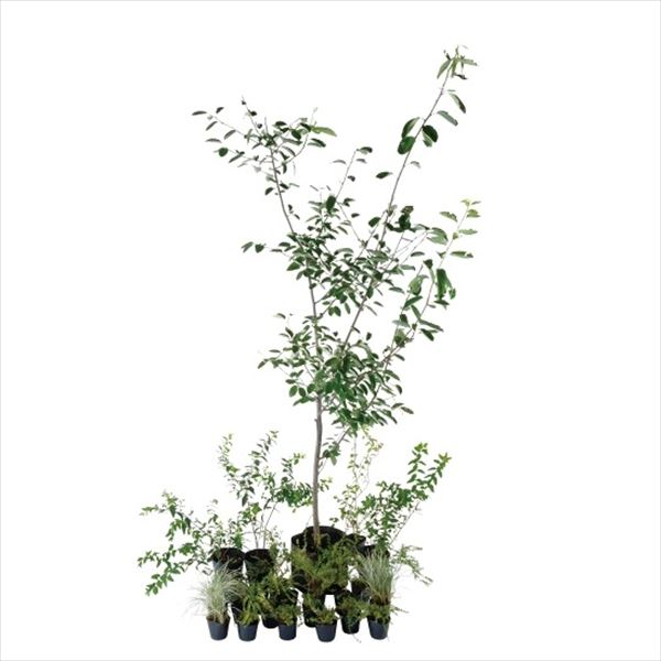 当店一番人気 オンリーワン エントランス向け植栽セット ブリーゼ ジューンベリー 永遠の定番 UN6-SET05 やさしい景色