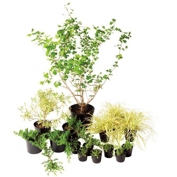 オンリーワン ボーダー花壇 植栽セット エレガント スノーボール やさしい景色 SZ6-SET07