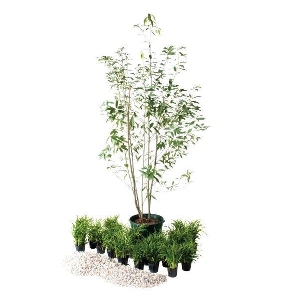オンリーワン 浴室前・ユーティリティ前 植栽セット インパクト シラカシ 和の景色 UN6-SET18