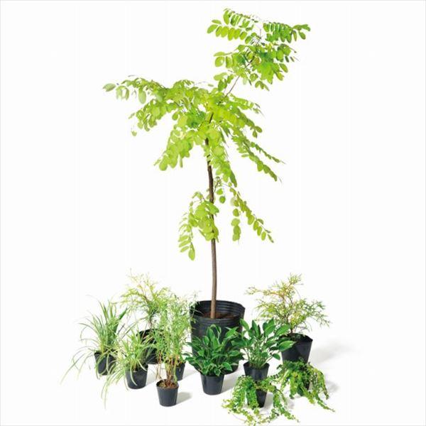 オンリーワン 彩で選ぶ 植栽セット カラー フリーシア 5感で選べるセット WP6-SET03