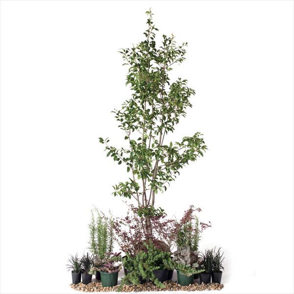 オンリーワン 彩で選ぶ 植栽セット カラー ソヨゴ 5感で選べるセット YE6-SET04