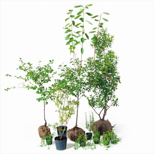 売却 送料無料 オンリーワン 1年保証 人気のベリーが楽しめる愛らしいお庭 食で選ぶ 植栽セット KJ6-SET04 5感で選べるセット ハーベスト ジューンベリー