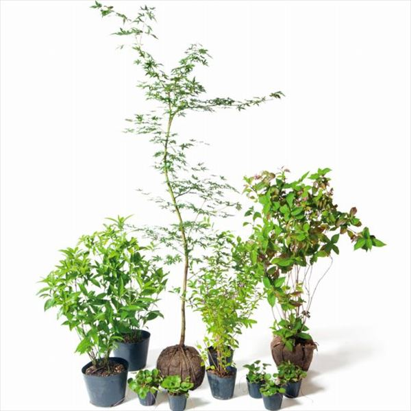 オンリーワン 食で選ぶ 植栽セット ハーベスト イロハモミジ 5感で選べるセット KJ6-SET01
