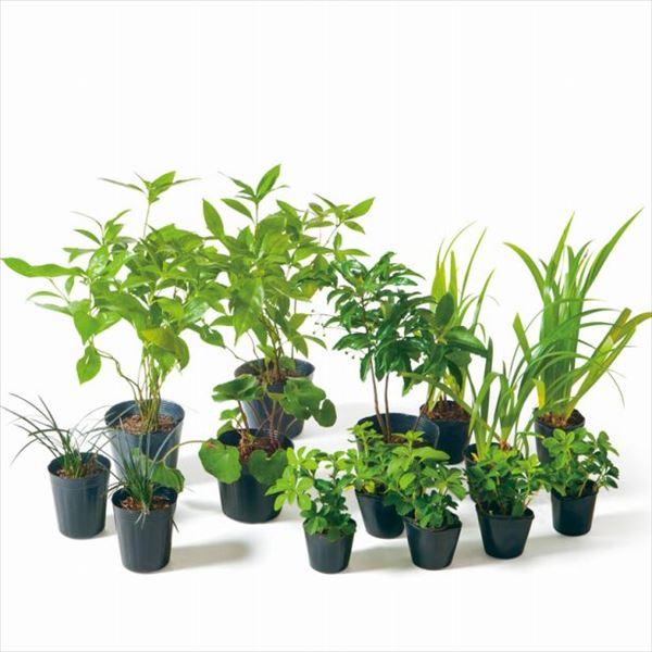 オンリーワン 目的で選ぶ 植栽セット 和(なごみ)下草 マンリョウ 和の景色 SZ6-SET01
