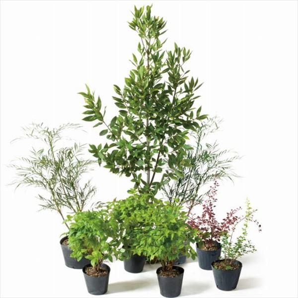 オンリーワン 目的で選ぶ 植栽セット ハッピー ゲッケイジュ 鬼門除け SZ6-SET05