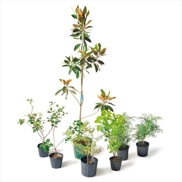 オンリーワン 目的で選ぶ 植栽セット イージー マグノリア お手入れ簡単 KJ6-SET11