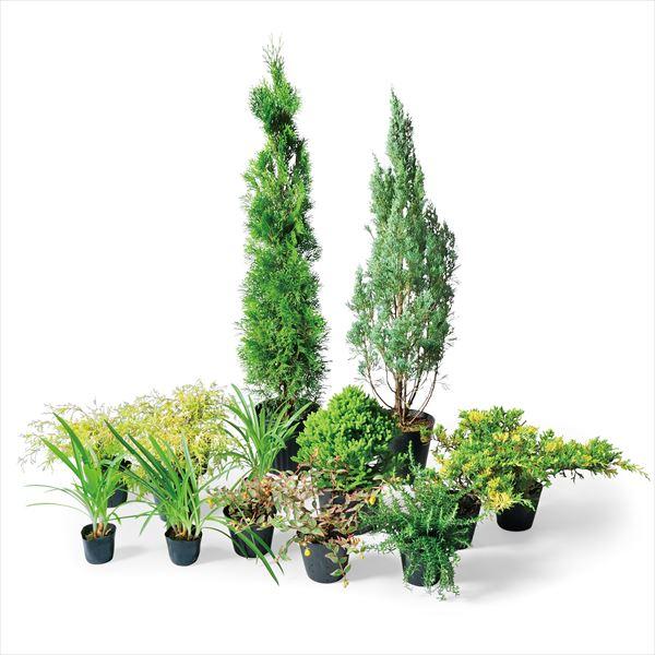 オンリーワン 目的で選ぶ 植栽セット イージー ウィッチタブルー お手入れ簡単 YE6-SET02