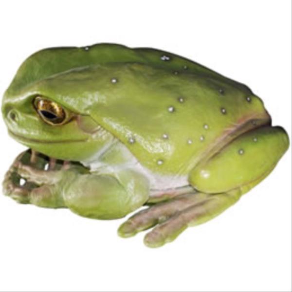 『欠品中』FRP でかいカエル / Frog JumBo 『カエルオブジェ アニマルオブジェ 店舗・イベント向け』