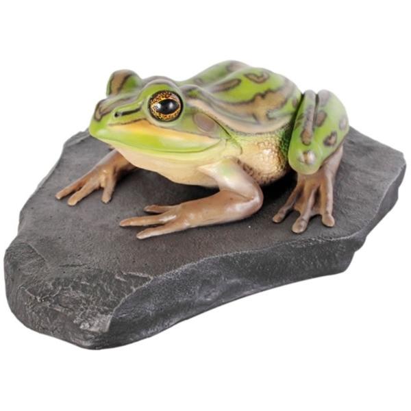 FRP 岩の上でくつろぐキンスジアメガエル / Green and Golden Bell Frog 『カエルオブジェ アニマルオブジェ 店舗・イベント向け』