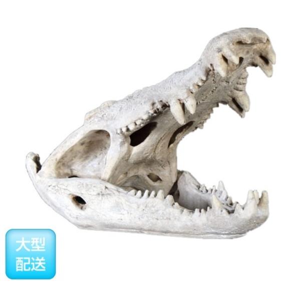 FRP ワニの頭骨 / Crocodile Skull 『恐竜オブジェ 博物館オブジェ 店舗・イベント向け』