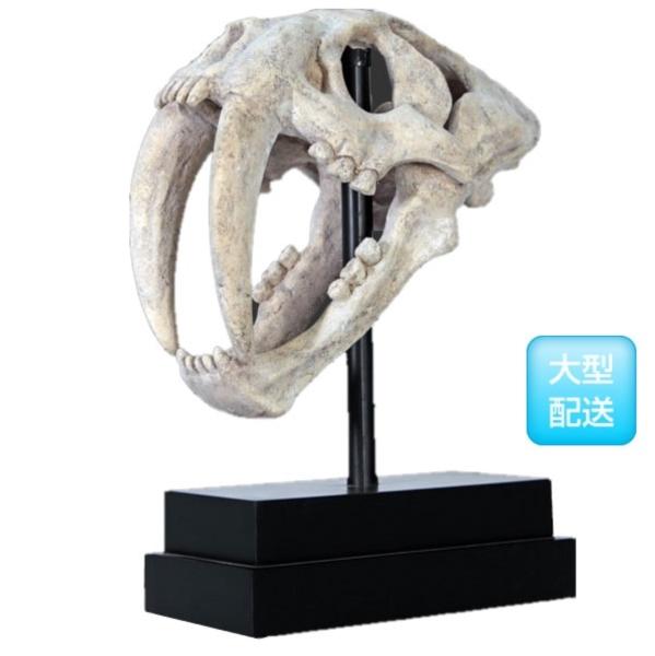 FRP サーベルタイガーの頭骨 / SaBer Toothed Tiger Skull on Base 『恐竜オブジェ 博物館オブジェ 店舗・イベント向け』