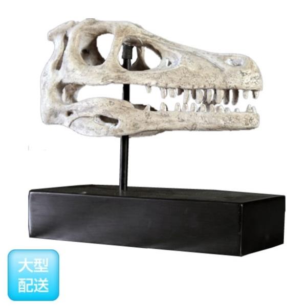 FRP ラプトルの頭骨 / Raptor Skull on Base 『恐竜オブジェ 博物館オブジェ 店舗・イベント向け』