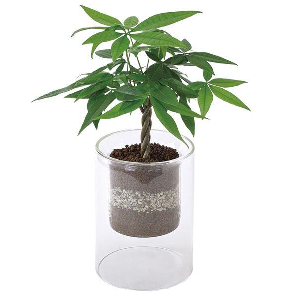スパイス ラボガラス シリンダー 観葉 植え込み ハイドロボール Sサイズ 4個セット #MUG17015
