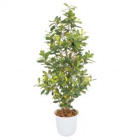 『人工植栽』 タカショー グリーンデコ和風 アオキ鉢付 1.5m GD-130