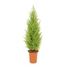 『人工植栽』 タカショー グリーンデコ鉢付 ゴールドクレスト ゴールド 1.2m GD-188