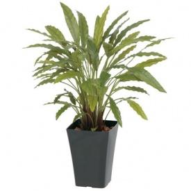 『人工植栽』 タカショー グリーンデコ鉢付 カラテアG グリーン 0.9m GD-164G