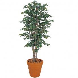 ベンジャミンナチュラル 1.8m タカショー グリーンデコ鉢付 『人工植栽』 GD-31L