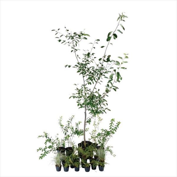 オンリーワン 予約販売品 エントランス向け植栽セット ブリーゼ 舗 やさしい景色 UN6-SET05 ジューンベリー