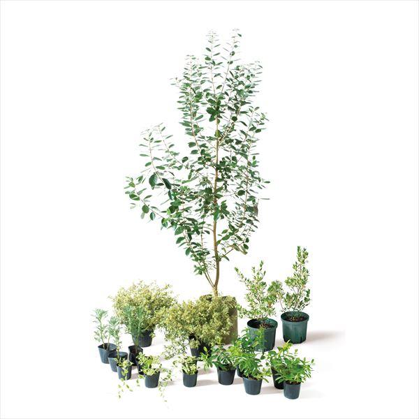 オンリーワン ランキングTOP5 エントランス向け植栽セット ブリーゼ UN6-SET04 半額 フェイジョア やさしい景色