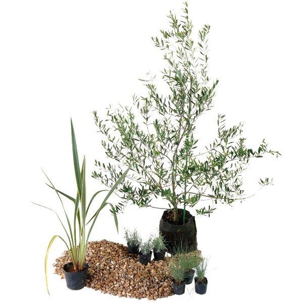 オンリーワン 大注目 エントランス向け植栽セット シック ストアー カッコいい景色 UN6-SET09 ニューサイラン
