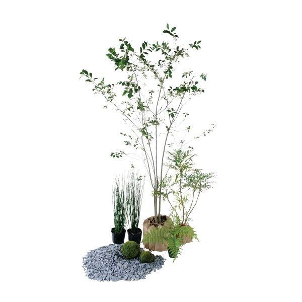 正規品スーパーSALE×店内全品キャンペーン オンリーワン エントランス向け植栽セット シック 特価 アロニア KJ6-SET12 カッコいい景色
