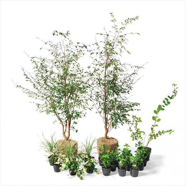 オンリーワン ボーダー花壇 驚きの価格が実現 植栽セット ブリーゼ UN6-SET02 やさしい景色 セール エリナ