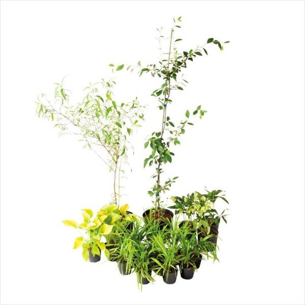 オンリーワン ボーダー花壇 植栽セット 即日出荷 ブリーゼ WP6-SET04 ブッドレア 正規品送料無料 やさしい景色