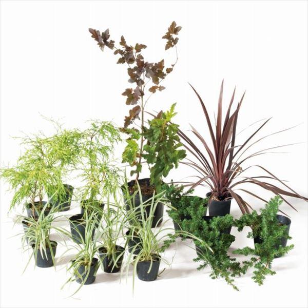 送料無料 オンリーワン 葉形 色合いどれをとっても おしゃれな風景 日本メーカー新品 ボーダー花壇 植栽セット SZ6-SET03 シック 大好評です カッコいい景色 ディアボロ