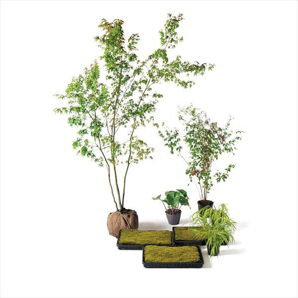 オンリーワン メインガーデン 植栽セット 和(なごみ) イロハモミジ 和の景色 UN6-SET17
