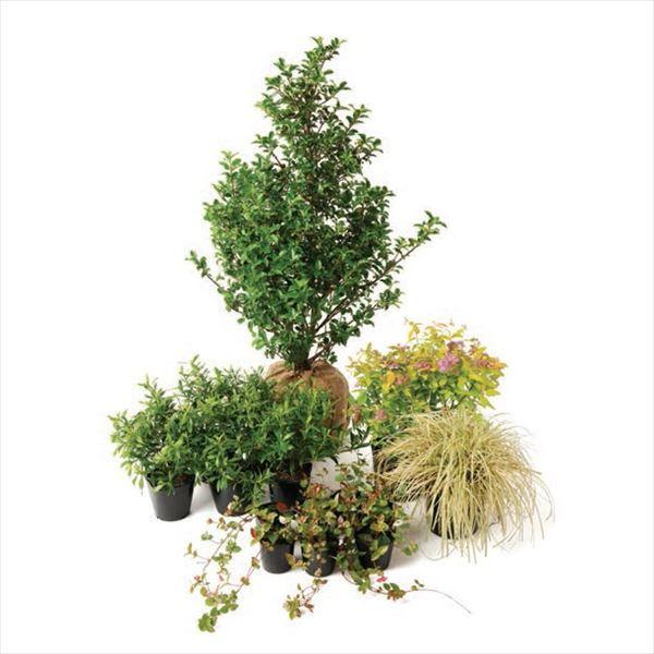 オンリーワン メインガーデン 植栽セット ブリーゼ ブループリンセス やさしい景色 UN6-SET14
