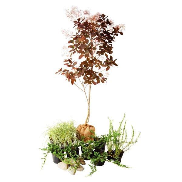 オンリーワン メインガーデン 植栽セット シック スモークツリー カッコいい景色 SZ6-SET04