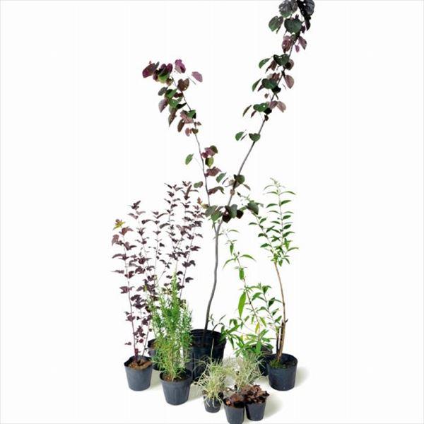 オンリーワン 彩で選ぶ 植栽セット カラー フォレストパンシー 5感で選べるセット ME6-SET06