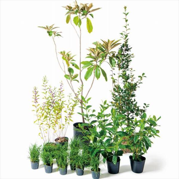 オンリーワン 音で選ぶ 植栽セット トーン ビワ 5感で選べるセット UN6-SET01