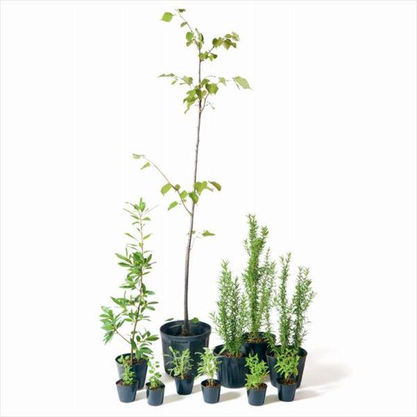 オンリーワン 香で選ぶ 植栽セット フレグラント シナノキ 5感で選べるセット WP6-SET01