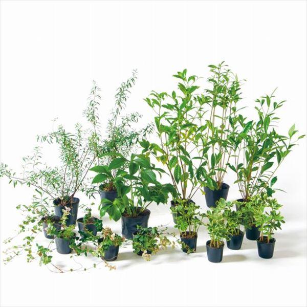 オンリーワン 目的で選ぶ 植栽セット ブリーゼ 下草 コデマリ やさしい景色 ME6-SET07