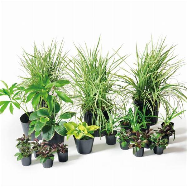 オンリーワン 目的で選ぶ 植栽セット エレガント 下草 アガパンサス やさしい景色 KJ6-SET09