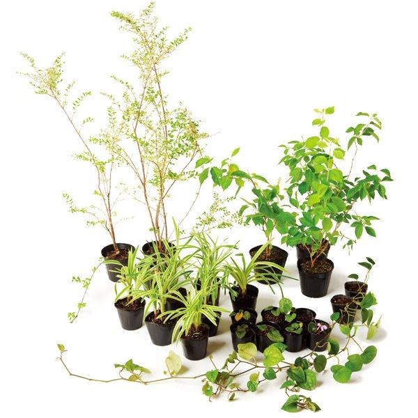 オンリーワン 目的で選ぶ 植栽セット ブリーゼ 下草 コーラルベリー やさしい景色 WP6-SET07