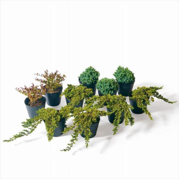 オンリーワン 目的で選ぶ 植栽セット イージー 下草 アカバメギ お手入れ簡単 ME6-SET01